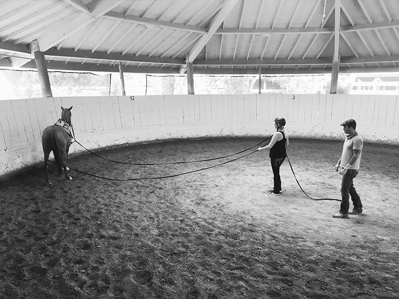 Simon Marrier d'Unienville - Horses 4 Hope - Monty Roberts Instructor Training Bursary Program