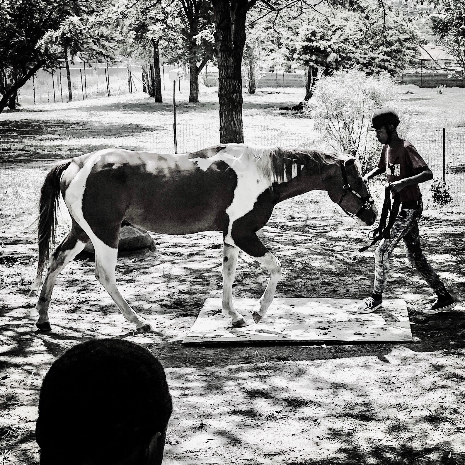 Lead-Up South Africa - Equine-Assisted Therapy programs for vulnerable youth